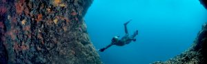 Discover wildlife with Freedive Yachting